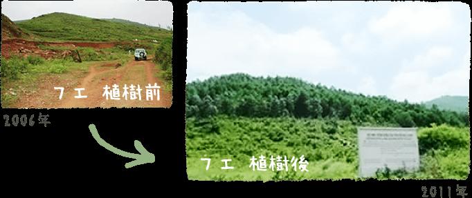 フエ 植樹前と植樹後