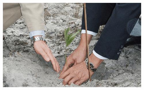 フエ省の知事と社長の植樹作業