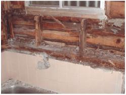 被害を受けた浴室の壁
