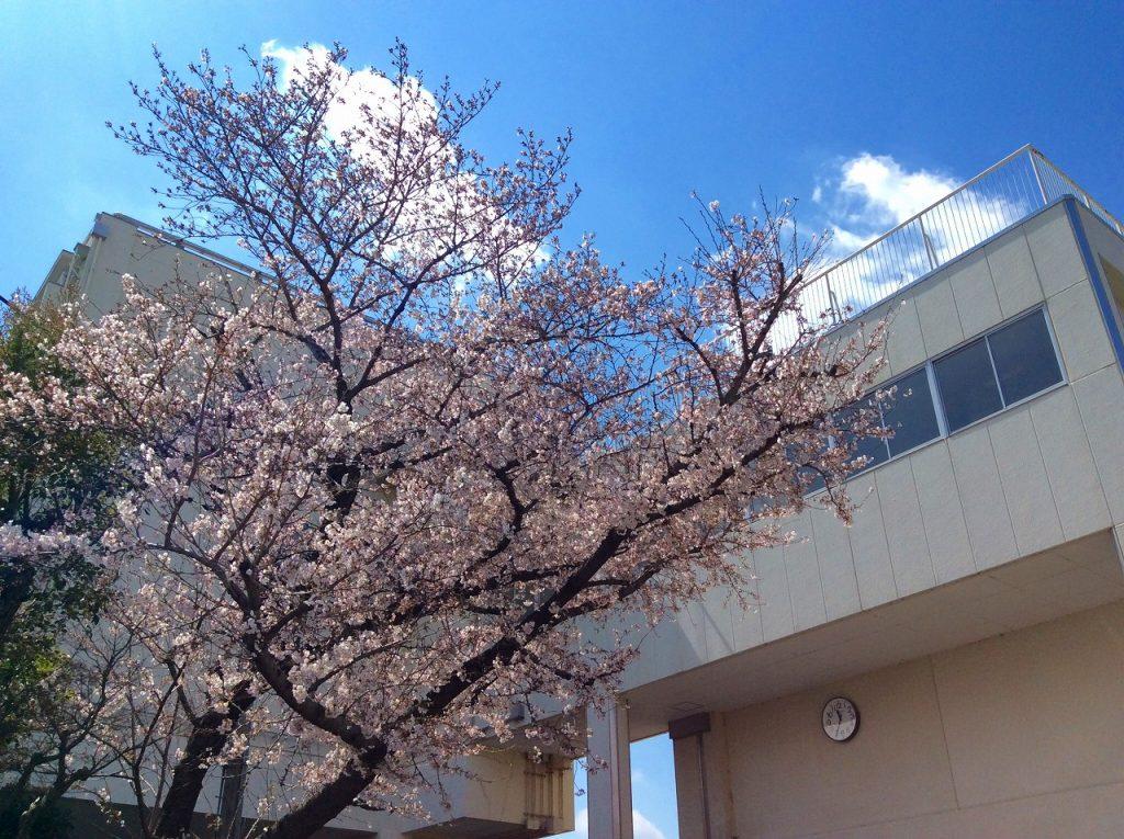 新しい季節と新しい時代(令和)